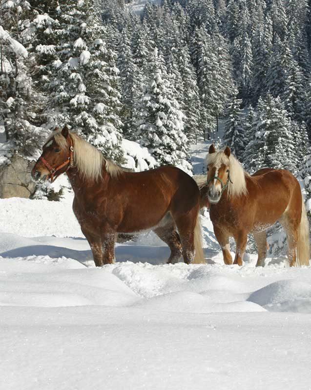 Pferde Winter